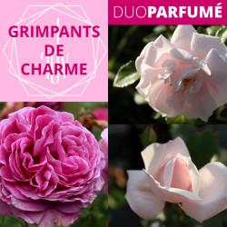 """Duo Parfumé_ """"Grimpants de Charme"""""""